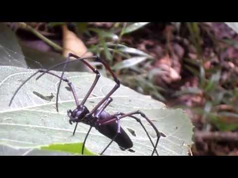 A Big Jungle Spider