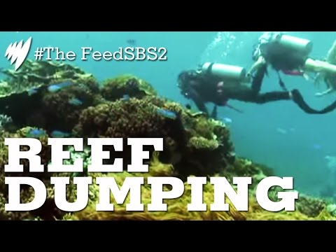 The real impact of dumping dredge spoil on The Great Barrier Reef (The Feed)