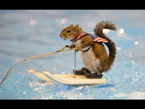 Životinjska olimpijada