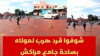 شوفوا قرد هرب لمولاه بساحة جامع مراكش | قنوات أخرى