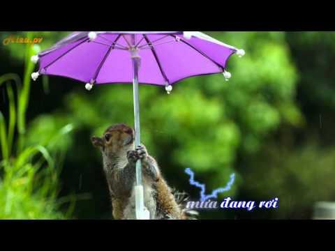 Mưa nhớ Trung Quân Idol Sub Kara [Video Lyric]