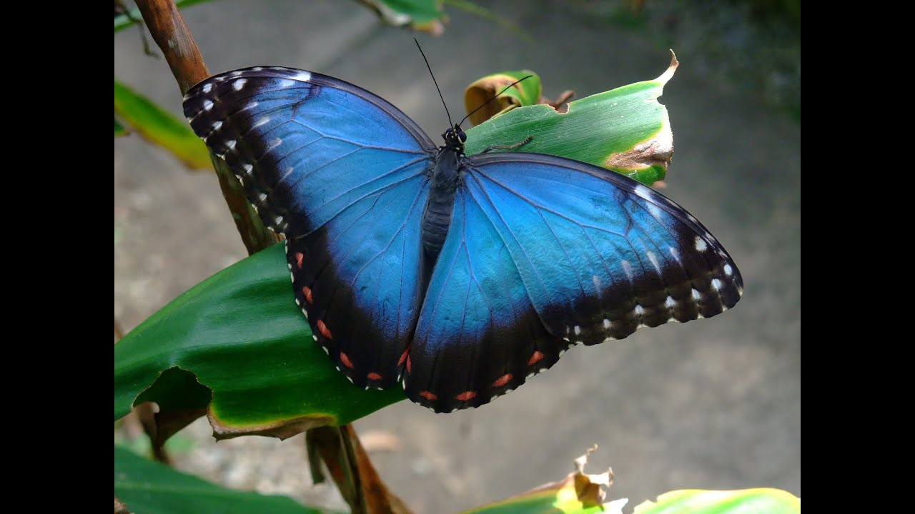 Tropical Butterfly House Seaforde Youtube