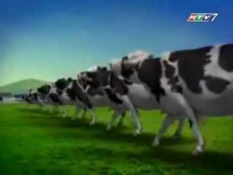 Vinamilk Sữa Bò 100%