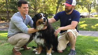 California wildfires: moment family's dog is found alive in ruins of home