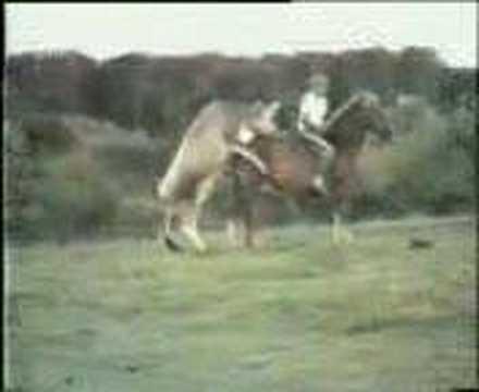 YouTube Parenje Konja