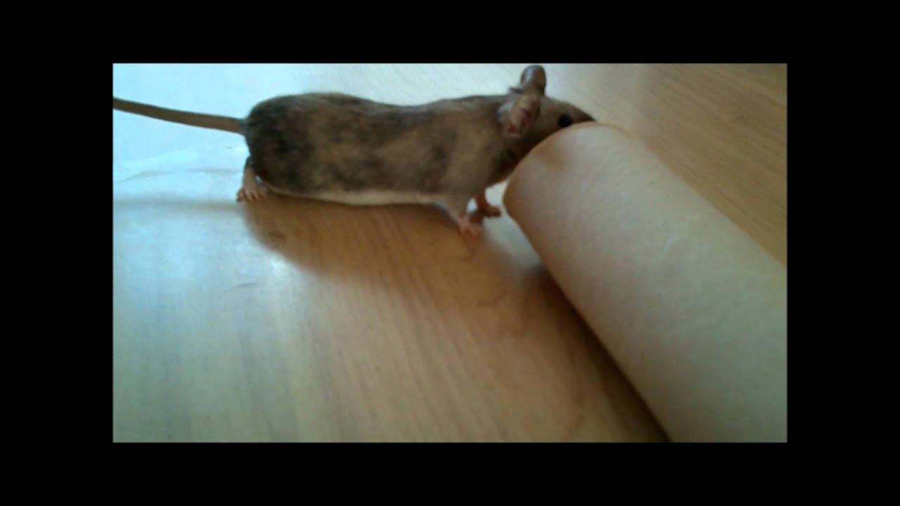 attraper une souris sans la tuer youtube