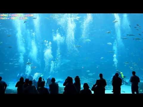 Những hồ cá lớn nhất thế giới, bể cá lớn nhất, hồ cá đẹp nhất