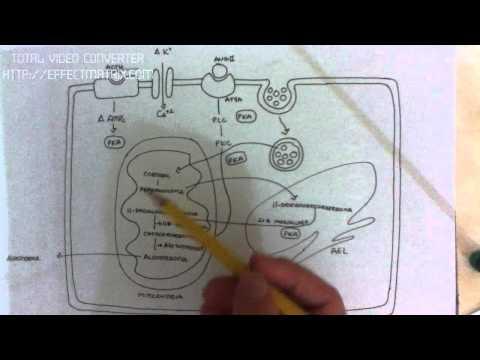 MINERALOCORTICOIDES: 3/6 secrecion de aldosterona