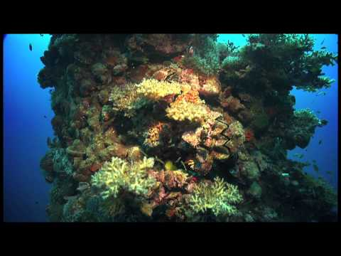 Coral reefs and climate change: A message for Copenhagen