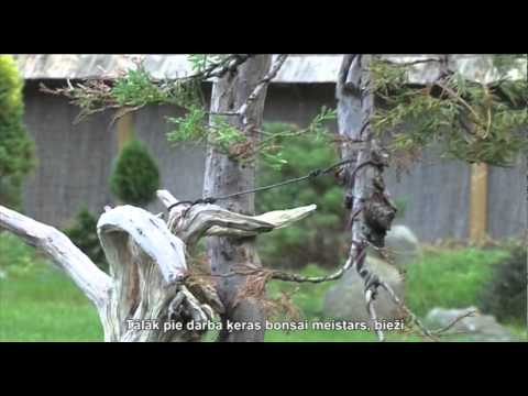 Искусство бонсай. Baltic Bonsai Parks