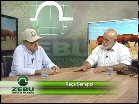 Ricardo Carneiro - entrevista Zebu para o Mundo