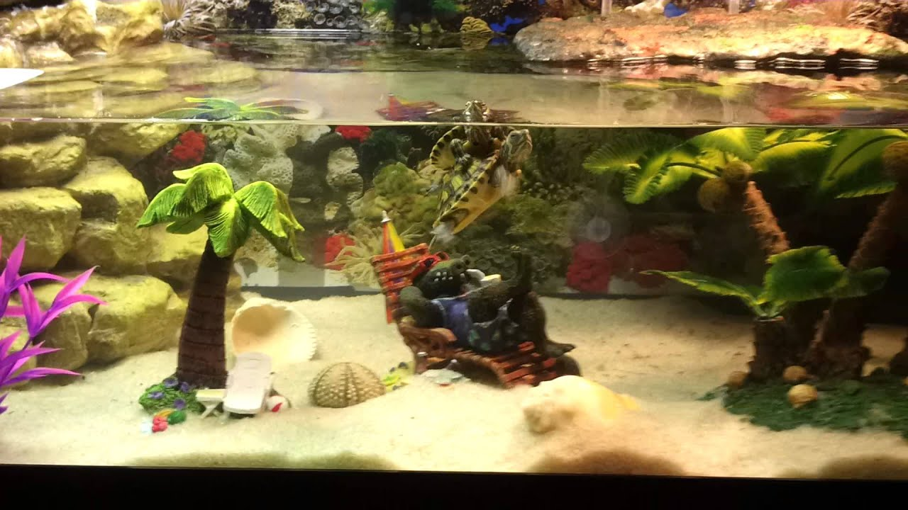 Small turtle tank.. yellow belly sliders - YouTube