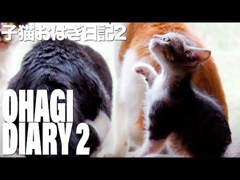 子猫おはぎ日記2 - Ohagi diary 2 -