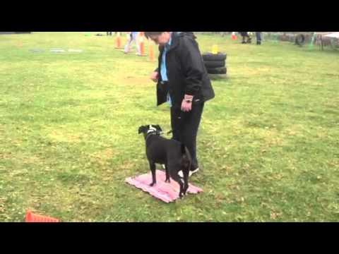 Pet Dog Manners Class