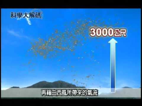 49. 沙塵暴的影響 - YouTube