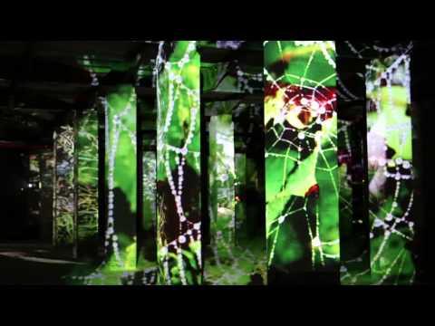 Symbiose - Olivier Crouzel