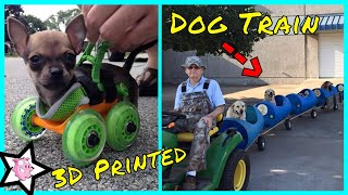 Creative Dog Owners Who Did Pawesome Things For Their Dogs