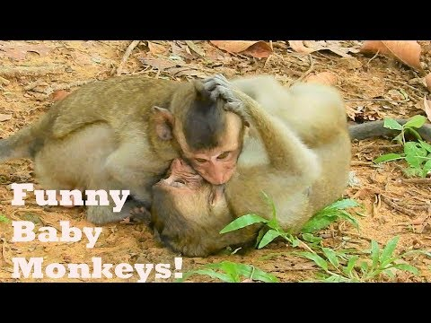 Wonderful Baby Monkey David Playing & Funny Fighting With Friends