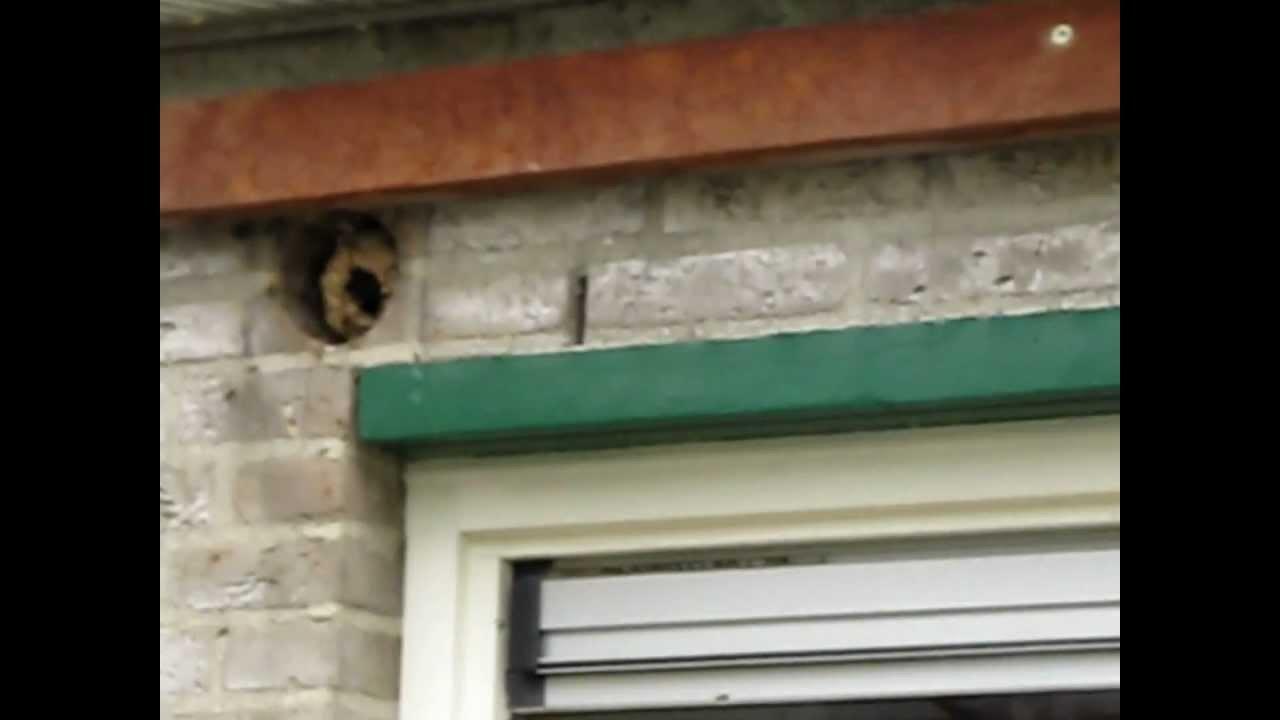 wespennest verwijderen remove wasp 39 s nest retirer nid de gu pe entfernen wespennest youtube. Black Bedroom Furniture Sets. Home Design Ideas