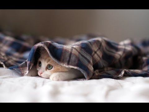 Funny Cats Compilation - Funny Cat Videos Ever- Funny Videos - Funny Animals - Funny Animal Videos 5