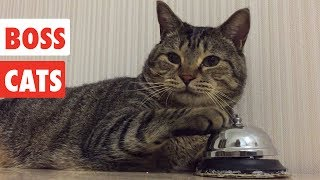 Boss Cats | Funny Cat Video Compilation 2017