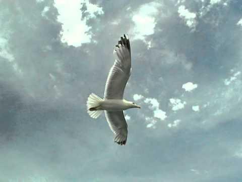 télécharger Hervé Cristiani – Il est libre Max