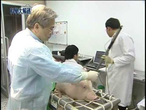 2. 豬隻人道屠宰 - YouTube