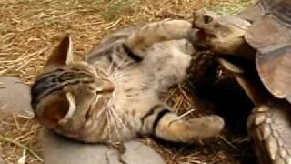 猫に興味津々の亀。猫は「なんやねんおまえ」状態