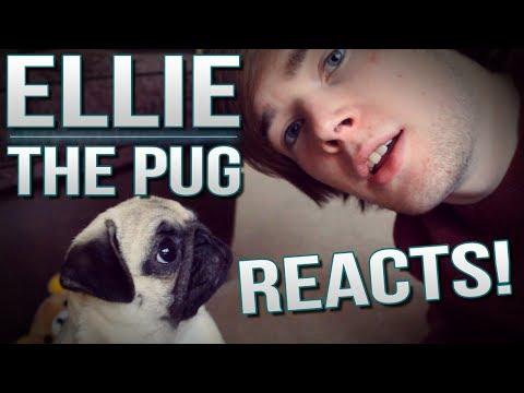 ELLIE THE PUG REACTS..   TDM Vlogs Episode 26