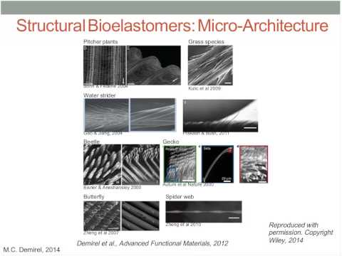 Webinar: Bio-Inspired Materials - Using Genomics to Engineer Recyclable Materials