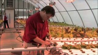 picture of Hydroponics Grower