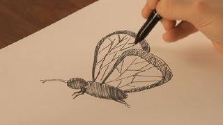 Dibujar mariposas
