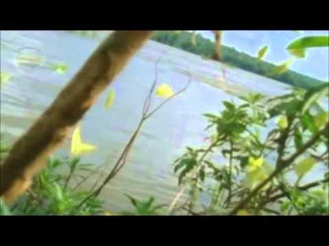 Raridade - Anderson Freire - Playback