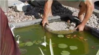 Care Of Lilies : Planting Instructions For Water Lily Pond