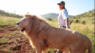 [Woman Walks FULL GROWN Lion] Video