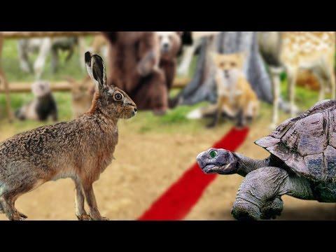 La liebre y la tortuga fabula completa en español