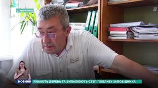 На Луганщині поблизу заповідника невідомі вирубили понад сотню дерев