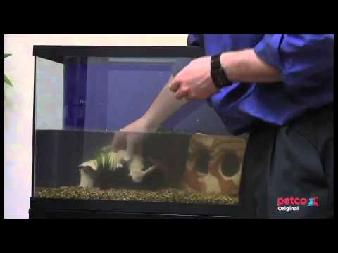 How to set up a freshwater aquarium petco youtube for Petco tropical fish