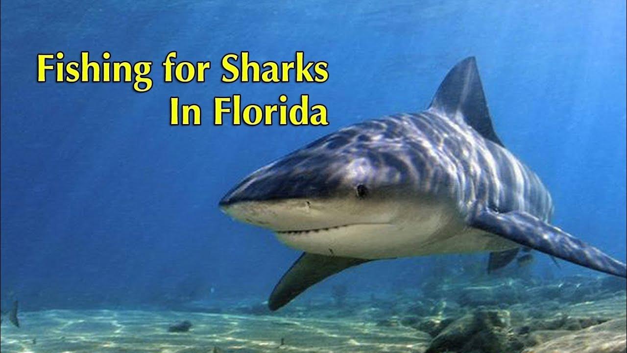 Bull shark fishing in florida youtube for Florida fishing license lookup