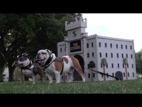 Citadel Mascots Featured in Charleston Magazine