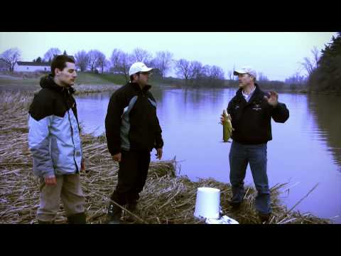 Shore Fishing Tips and Tricks for Channel Catfish