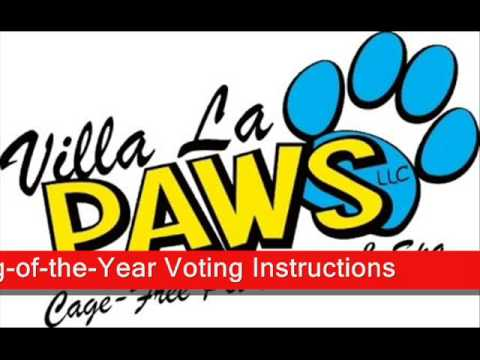 Villa La PAWS 2008 Dog of The Year Competition
