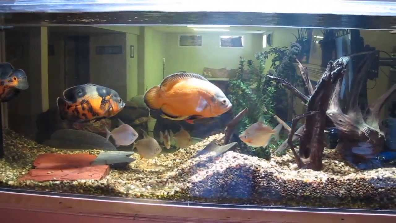fish tank decorations for oscars go back gallery for