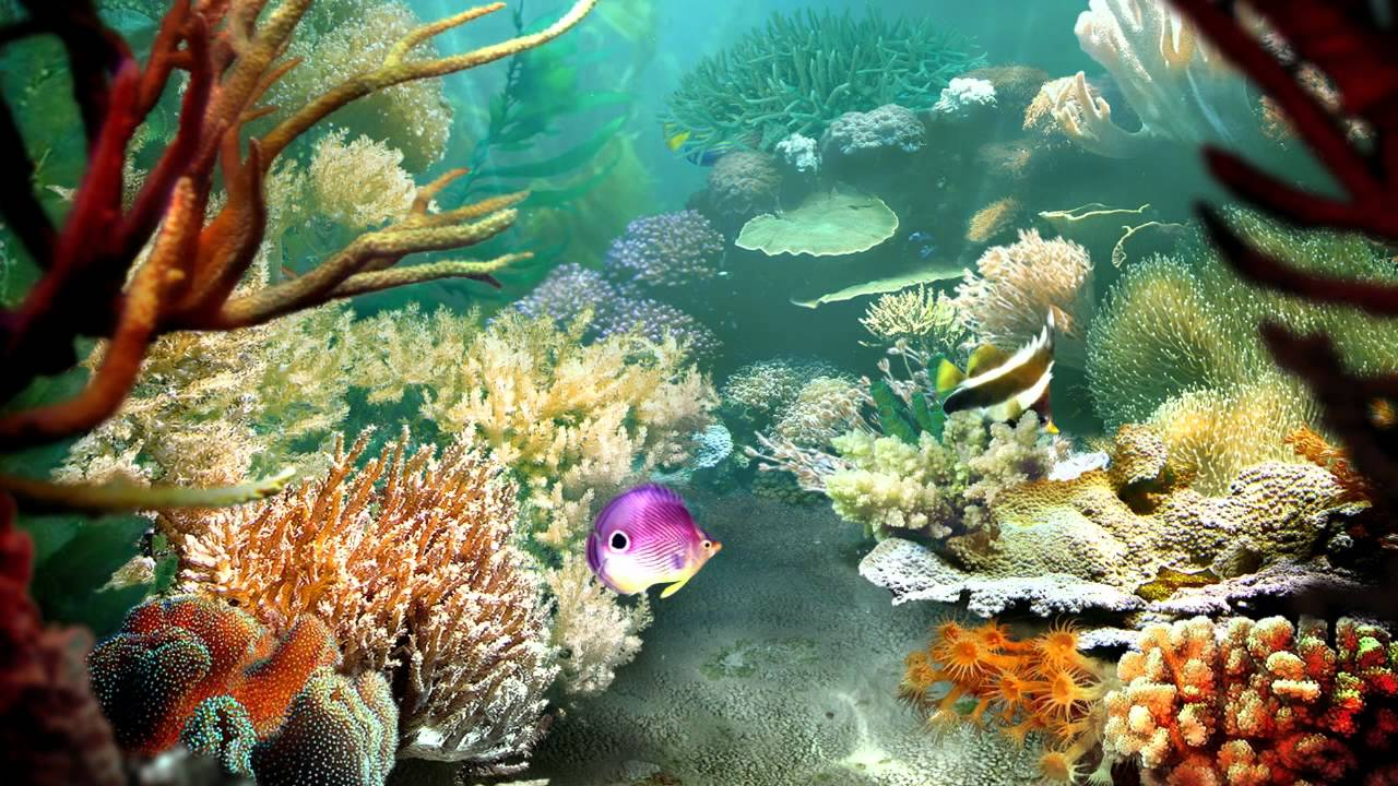 Tropical fish 3d screensaver tropical fish 3d for Moving fish screensaver