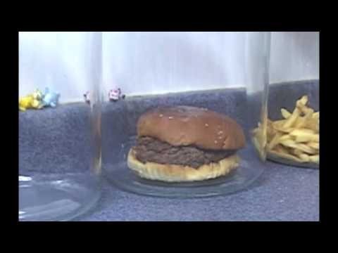 The Decomposition Of McDonald's Burgers And Fries., See what happens after 8 weeks.