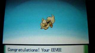Shiny Eevee Evolves Into Every Eeveelution