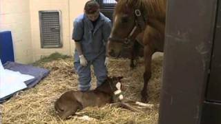 Equine Neonatal Medicine view on youtube.com tube online.