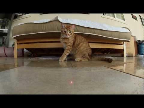 Cats Vs. Laser