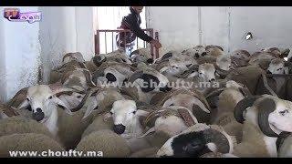 بالفيديو.. خبر سار للمغاربة بخصوص عيد الأضحى | بــووز