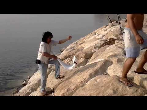 al khobar holyday fishing 7kilo lapis by nady.mp4